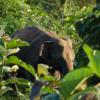 子象の道路横断