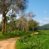 ジャングルの道をジープで行く