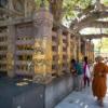 ブッダが悟りを開いた菩提樹の下で、木漏れ日を浴びる