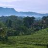 バリ島の農村で迎える朝