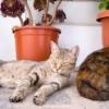昼寝猫の写真を撮りに、コスタデルソルの白い村へ