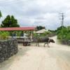 沖縄にもあった、平家の落人の島