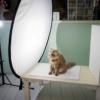 おくつろぎ中のネコたちを撮影する