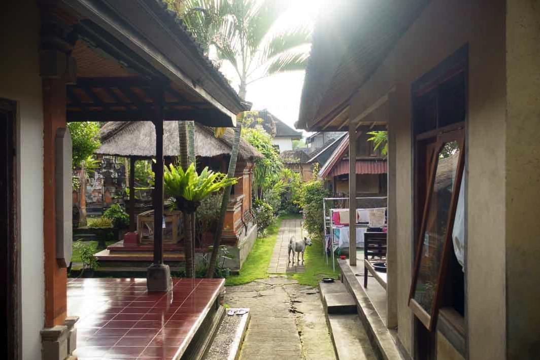 Morning walk 139