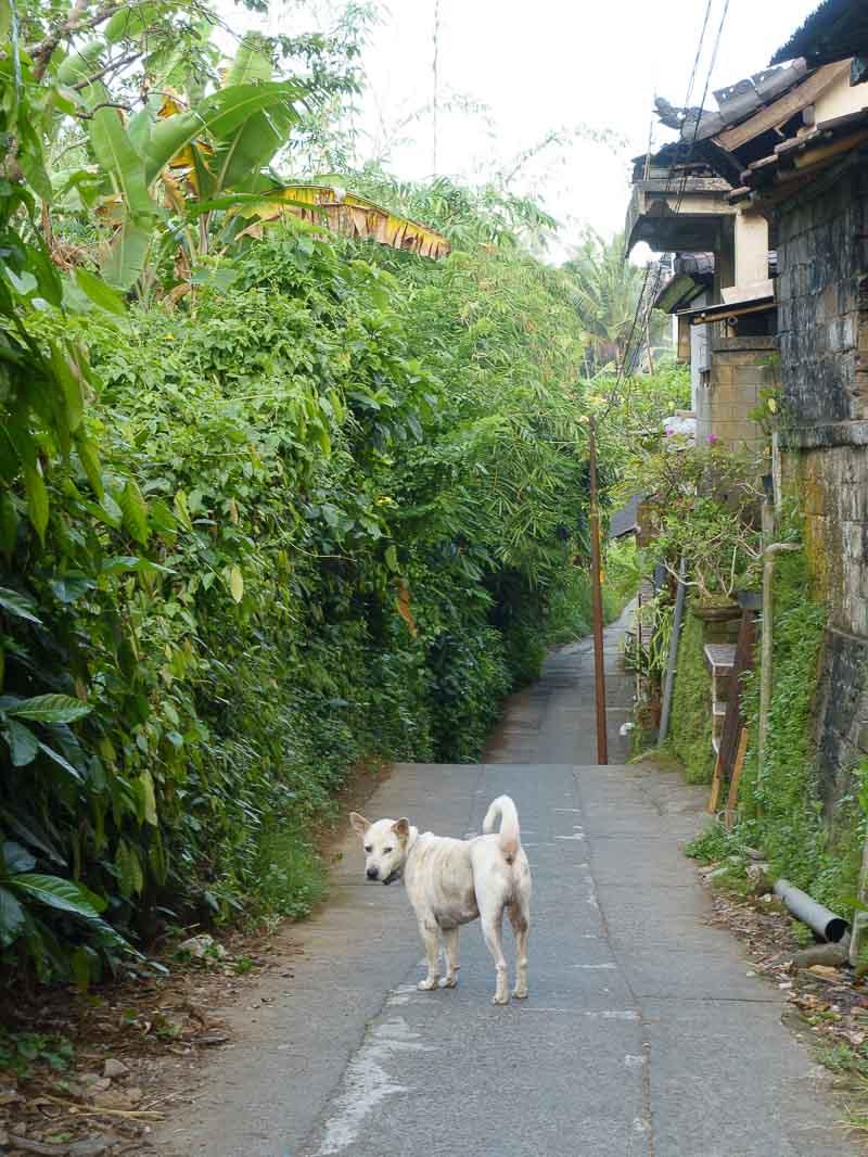 Morning walk 140