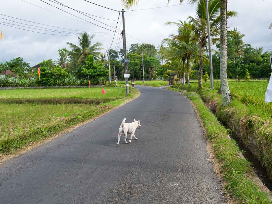 Morning walk 152