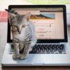 ブログを始めよう【無料ブログor有料ブログ】メリットとデメリットを比較してみる