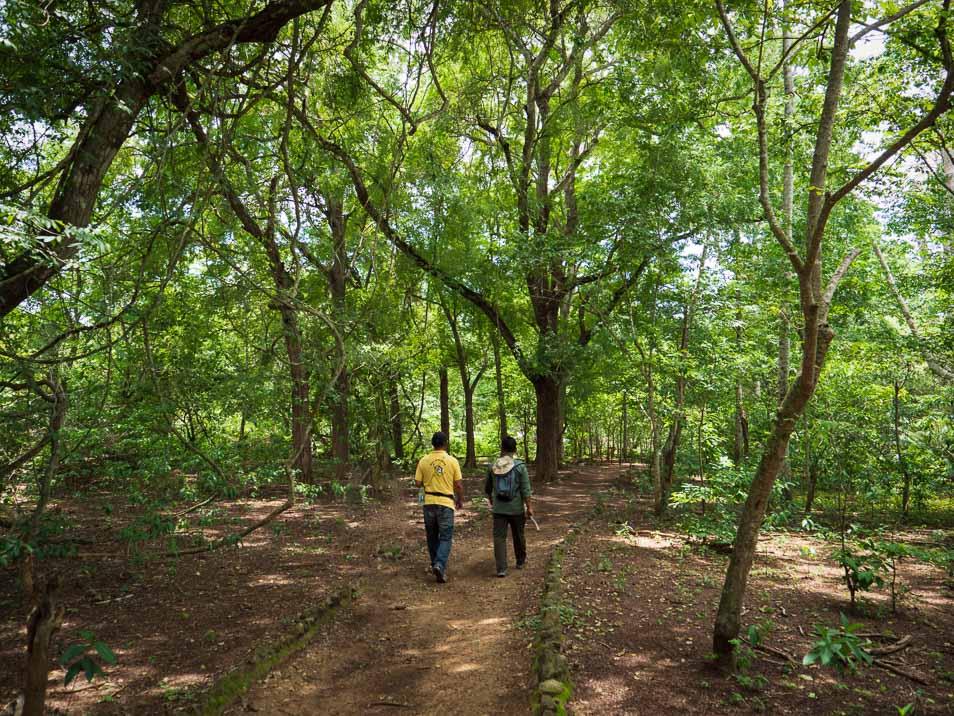 コモド島の密林