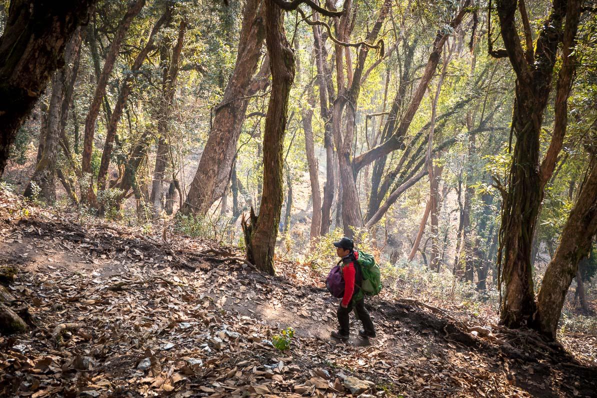 落ち葉がたまる山路を歩く