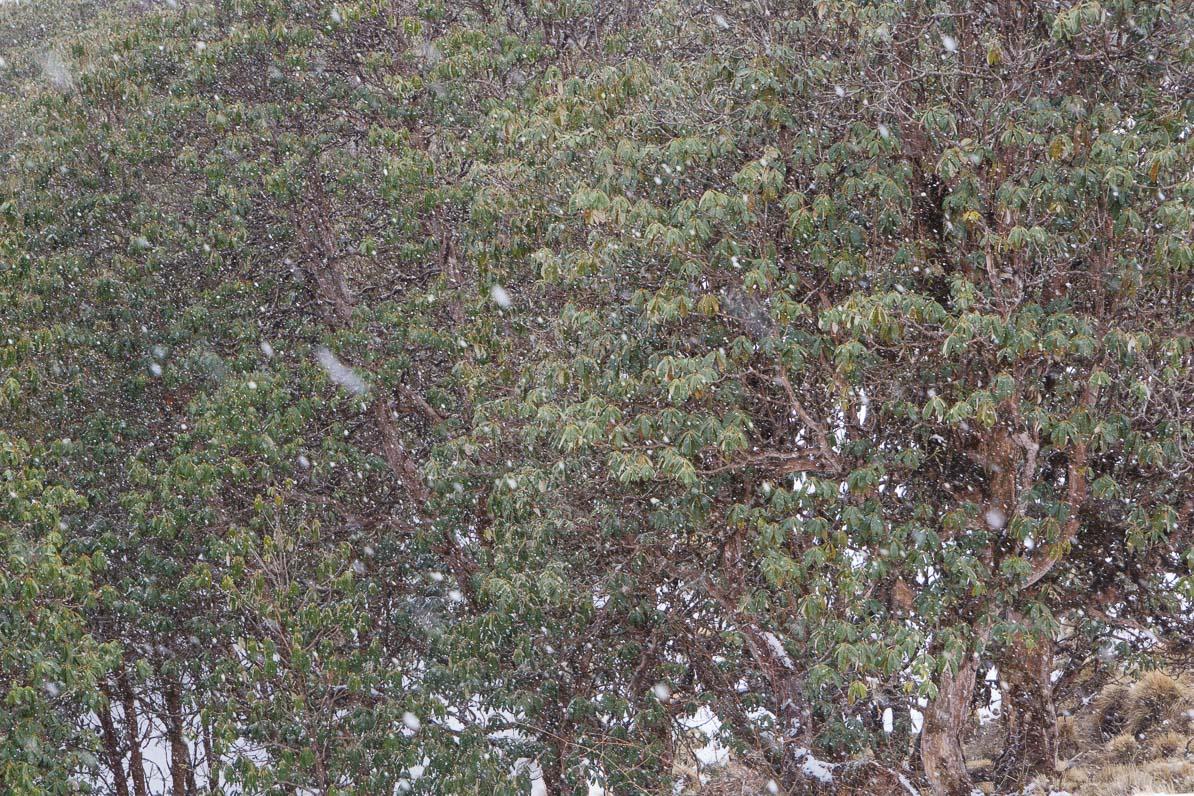雪が降り始める