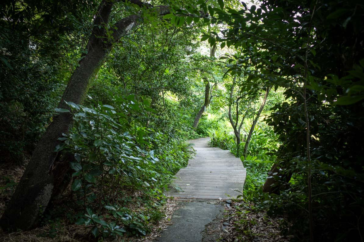 駐車場から武相荘の門へ続く道