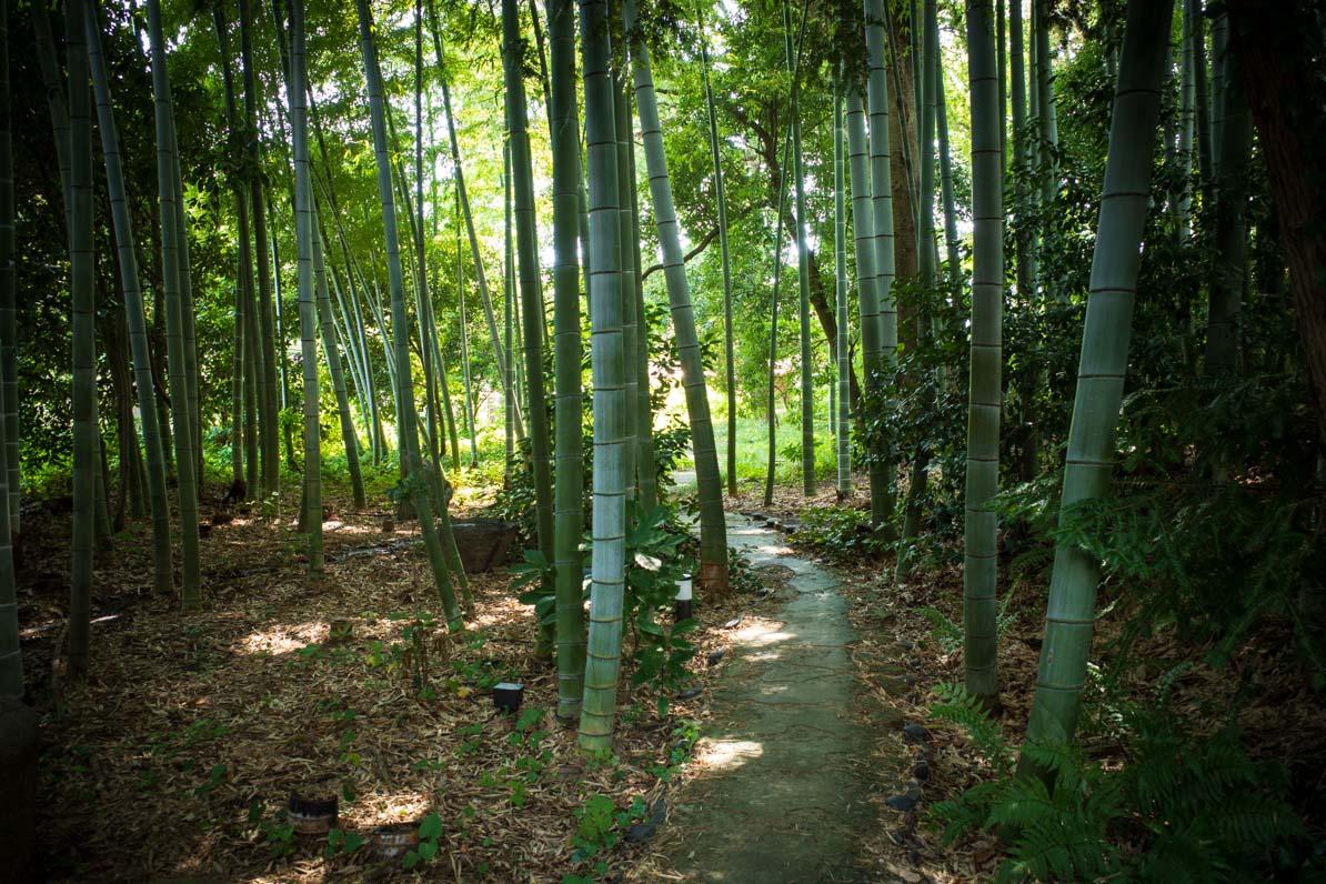 武相荘の庭の竹林