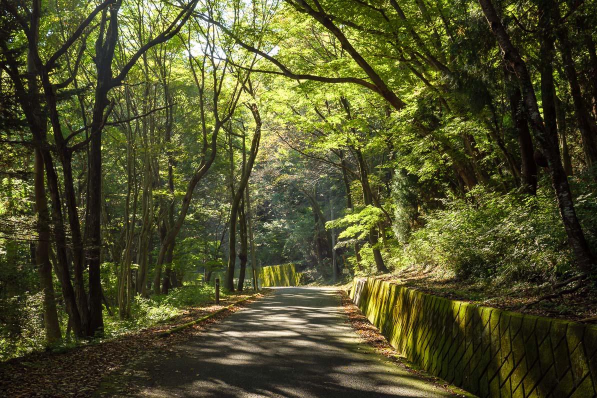 秩父市の美の山公園への自動車道路